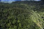 Rainforest in Borneo -- sabah_aerial_0471