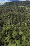 Rainforest in Borneo -- sabah_aerial_0472