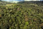 Rainforest in Borneo -- sabah_aerial_0475
