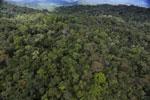 Rainforest in Borneo -- sabah_aerial_0476
