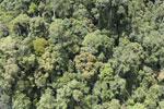 Rainforest in Borneo -- sabah_aerial_0485