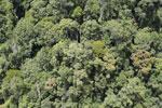 Rainforest in Borneo -- sabah_aerial_0486