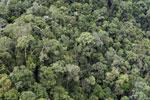Rainforest in Borneo -- sabah_aerial_0488