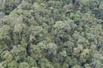 Rainforest in Borneo -- sabah_aerial_0489