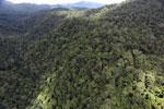 Rainforest in Borneo -- sabah_aerial_0493