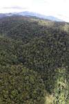 Rainforest in Borneo -- sabah_aerial_0498