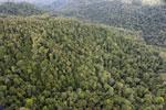 Rainforest in Borneo -- sabah_aerial_0510