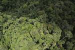 Rainforest in Borneo -- sabah_aerial_0518