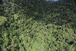 Rainforest in Borneo -- sabah_aerial_0519