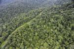 Logging road in Borneo -- sabah_aerial_0522