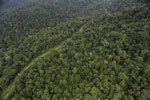 Logging road in Borneo