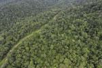 Logging road in Borneo -- sabah_aerial_0524