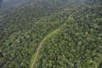 Logging road in Borneo -- sabah_aerial_0526