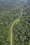 Logging road in Borneo -- sabah_aerial_0530