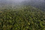 Rainforest in Borneo -- sabah_aerial_0532
