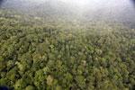 Rainforest in Borneo -- sabah_aerial_0536