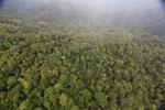 Rainforest in Borneo -- sabah_aerial_0538