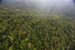 Rainforest in Borneo -- sabah_aerial_0539