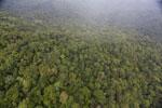 Rainforest in Borneo -- sabah_aerial_0540