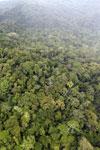 Rainforest in Borneo -- sabah_aerial_0541
