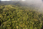 Rainforest in Borneo -- sabah_aerial_0546