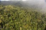 Rainforest in Borneo -- sabah_aerial_0549