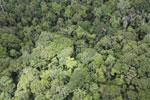 Rainforest in Borneo -- sabah_aerial_0551