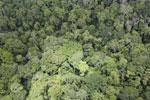 Rainforest in Borneo -- sabah_aerial_0552