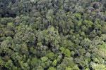 Rainforest in Borneo -- sabah_aerial_0554