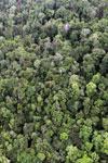 Rainforest in Borneo -- sabah_aerial_0556