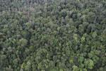 Rainforest in Borneo -- sabah_aerial_0557
