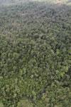 Rainforest in Borneo -- sabah_aerial_0558