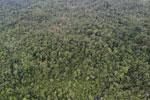 Rainforest in Borneo -- sabah_aerial_0559