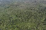 Rainforest in Borneo -- sabah_aerial_0560