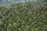 Rainforest in Borneo -- sabah_aerial_0563