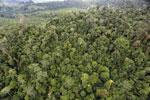 Rainforest in Borneo -- sabah_aerial_0565