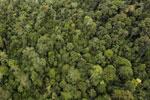 Rainforest in Borneo -- sabah_aerial_0566