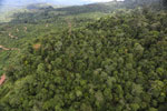 Deforestation for palm oil in Borneo -- sabah_aerial_0567