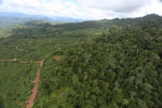 Deforestation for palm oil in Borneo