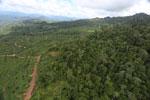Deforestation for palm oil in Borneo