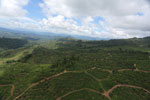 Deforestation for palm oil in Borneo -- sabah_aerial_0570