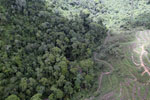 Deforestation for palm oil in Borneo -- sabah_aerial_0574