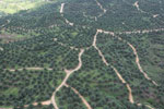Oil palm plantations in Borneo -- sabah_aerial_0578