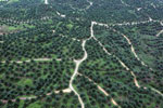 Oil palm plantations in Borneo -- sabah_aerial_0579