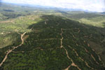 Oil palm plantations in Borneo -- sabah_aerial_0580