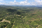 Oil palm plantations in Borneo -- sabah_aerial_0583