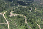 Oil palm plantations in Borneo -- sabah_aerial_0585