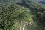Conversion of rainforest for palm oil production in Borneo -- sabah_aerial_0588