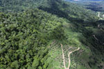 Conversion of rainforest for palm oil production in Borneo