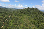 Conversion of rainforest for palm oil production in Borneo -- sabah_aerial_0591
